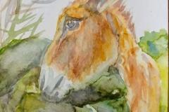 burros yolanda