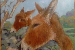 burros cristina