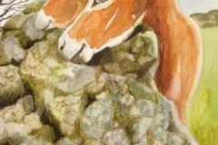 burros noemí